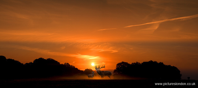 DEER AT DAWN 01
